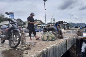 Dampak Pembangunan Taman Laut Dermaga, Nelayan Kini Bisa Memanen Ikan Karang Disekitar Pelabuhan
