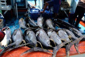 Mempertahankan Trend Positif, Produksi Perikanan PPP Pondokdadap Meningkat 139% di Bulan April 2021