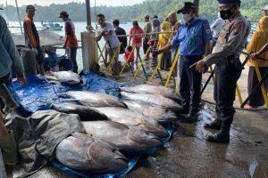 Bulan Mei 2021, PPP Pondokdadap Mengalami lonjakan Produksi Albakor dan Tuna Mata Besar
