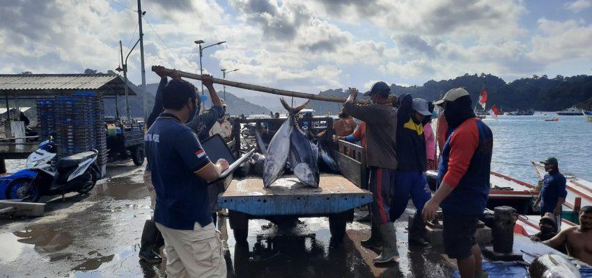 Bulan Juli 2021, Produksi Ikan Tuna Sirip Kuning Meningkat 123%